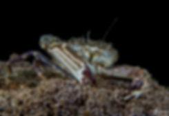 crab (1 of 1)-min.jpg