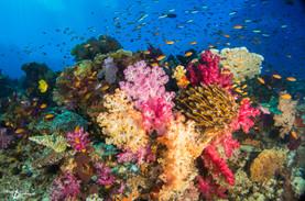 Fiji (9 of 1).jpg
