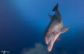Dolphin (2 of 1).jpg