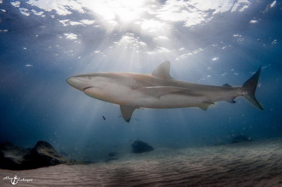 Sharks_December (25 of 1).jpg