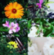 Naturopath Herbal