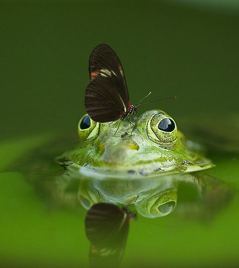 frog-540812_1920_edited_edited.jpg