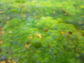 algae-1578953_1920.jpg