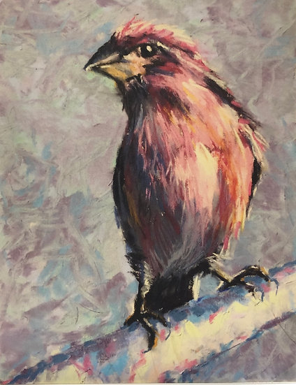 Notecard 3: Purple House Finch