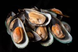 NZ Half Shell Green Musse