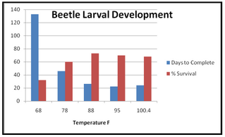 The Science Behind Beetle Temperature