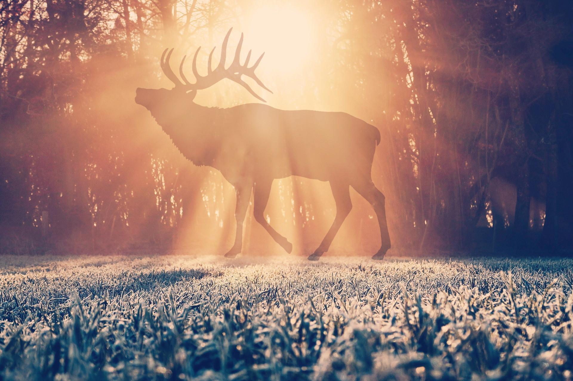 Dancing Elk Shamanic Healing