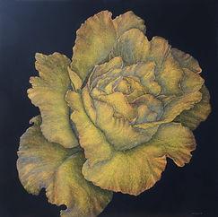 Droll Rose.JPG