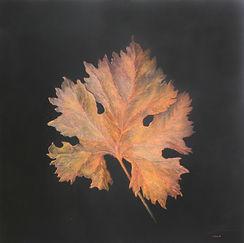 Droll Herbstgold.JPG