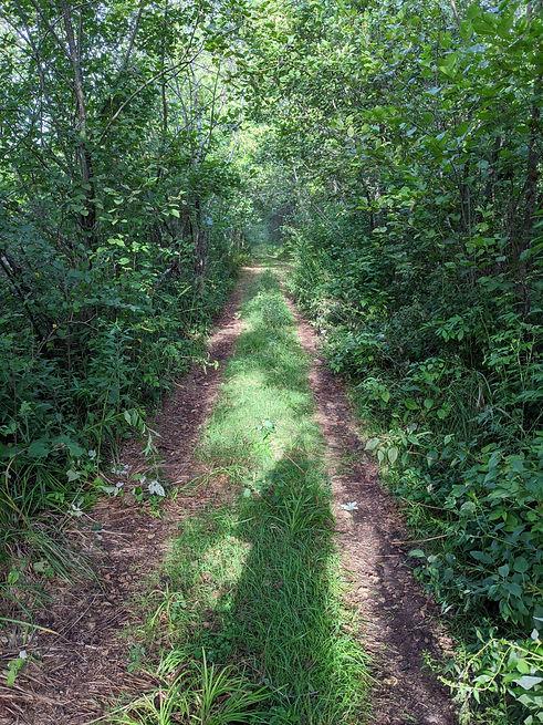 trail-image.jpg
