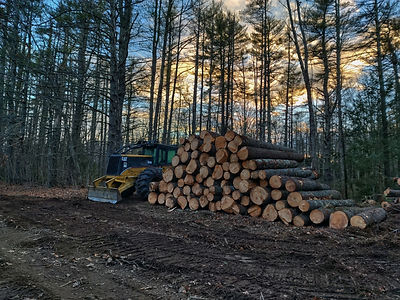 forestry service maine.jpg