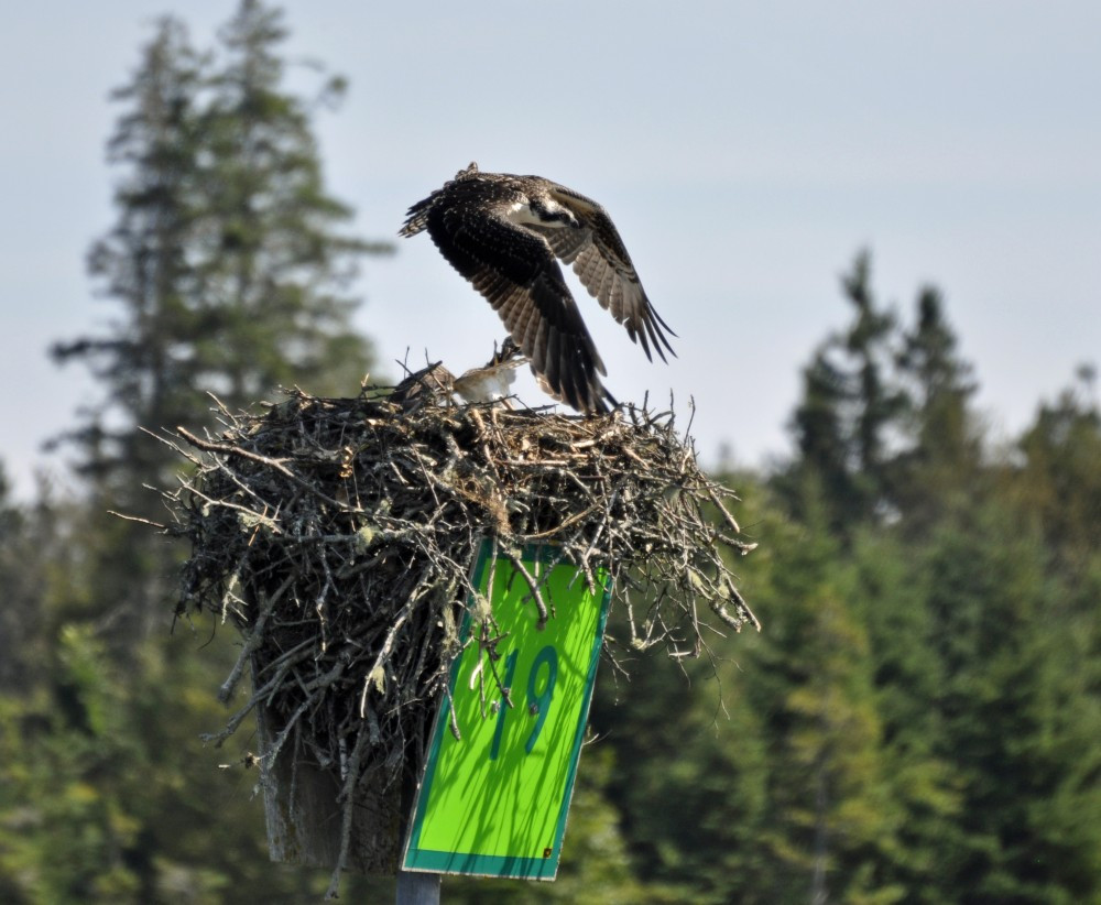 nature tours in Maine
