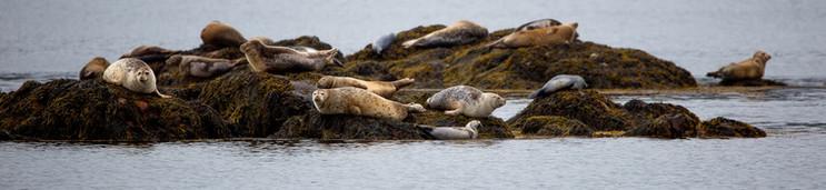 Seals on ledge-4604.jpg