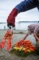 One Red lobster-5900.jpg