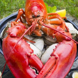 1.25 lb. Live Maine Lobster