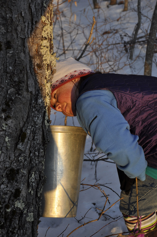 maine windjammer cruise vacations feature maple syrup