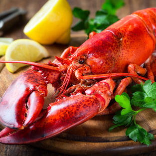 1 lb. Live Maine Lobster