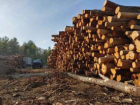 maine logging company.jpg