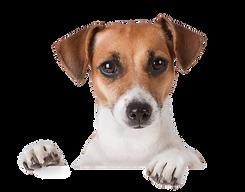 dog-png-veterinary-cpas-consultants-katz