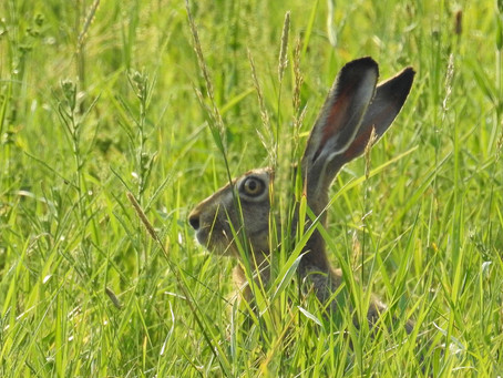 Chasing Wild Hares