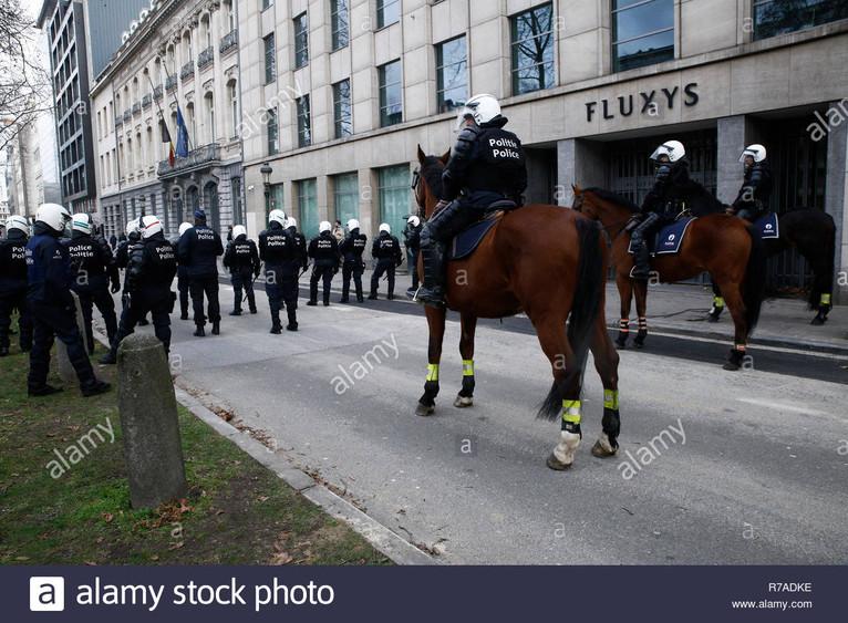 Belgium.horse.jpg
