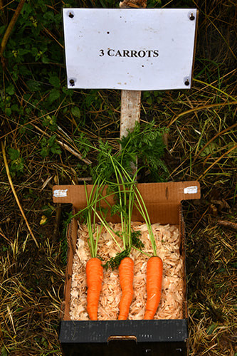 carrots_orig (2).jpg