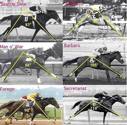 horse stride.jpg