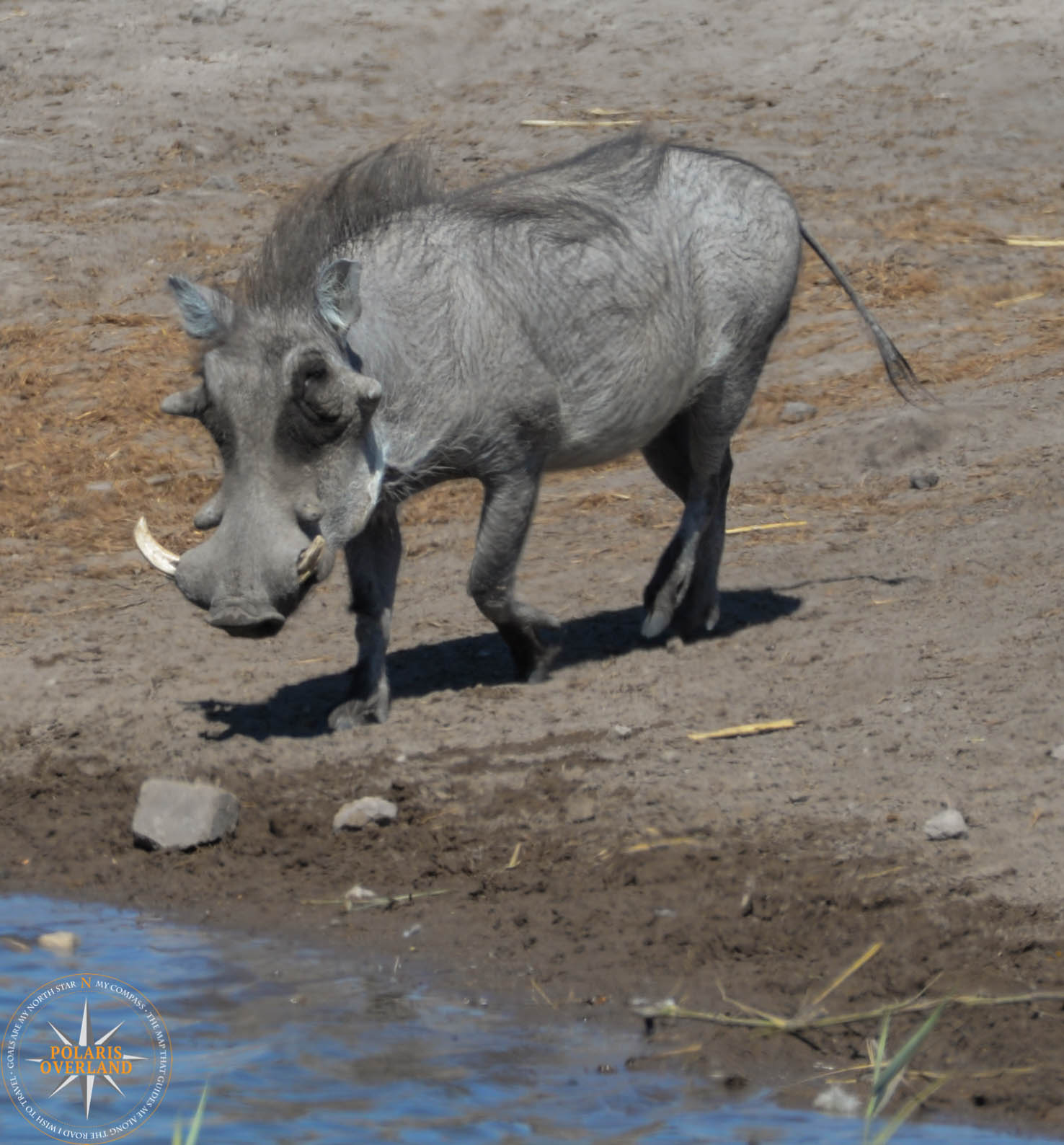 Namibia Day 11