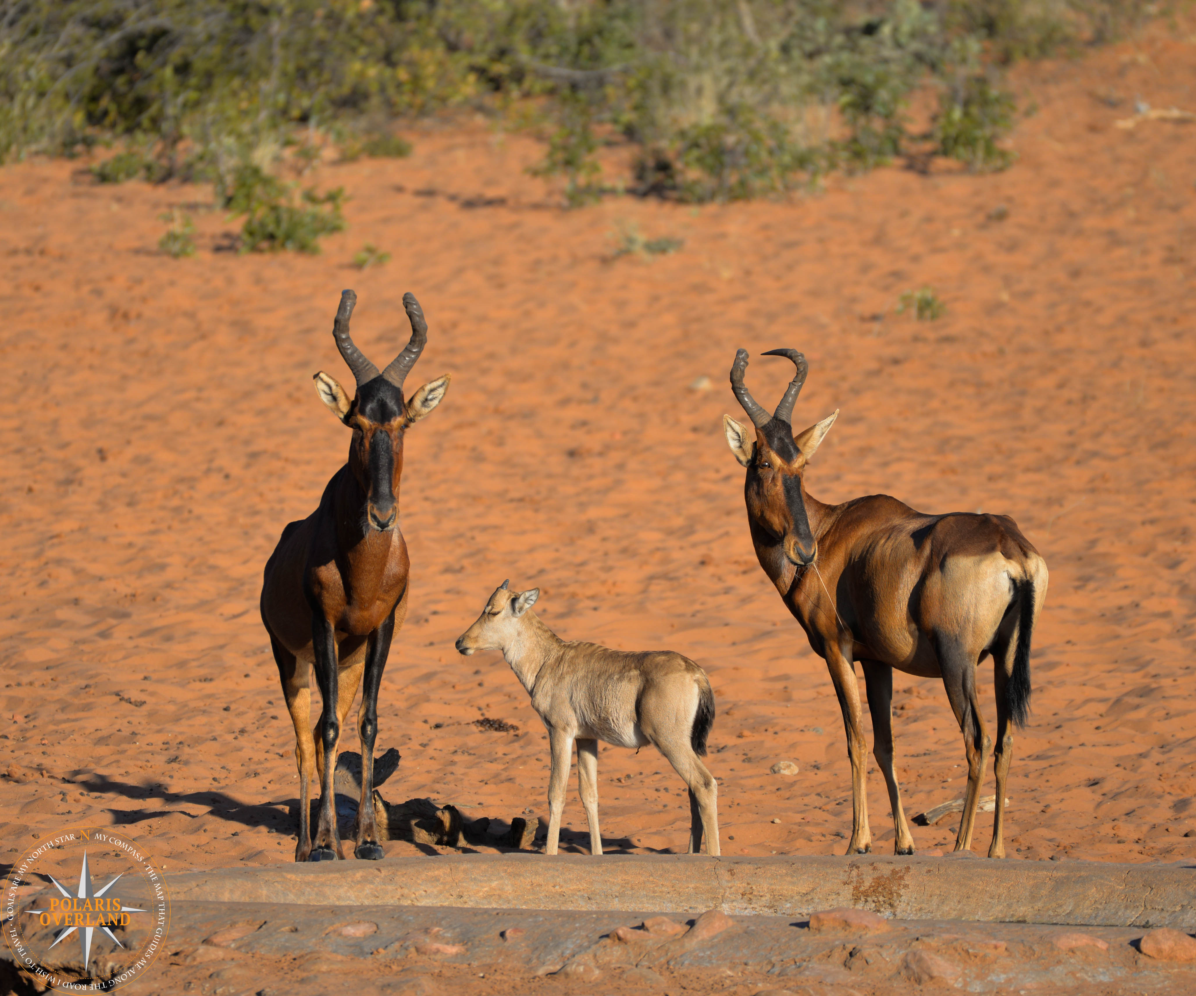 Namibia Day 13