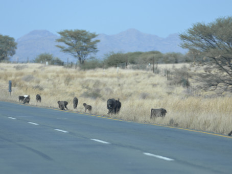 Namibia Day 2 - Windhoek to Sesriem