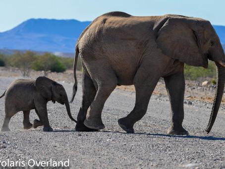 Namibia Day 8 - Moweni Camp to Otjitotongwe Cheetah Guest Farm