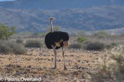Namibia Day 8