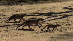 Namibia Day 14