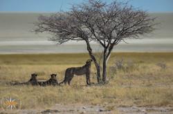 Namibia Day 11