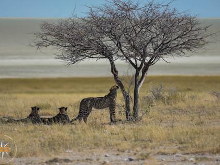 Namibia Day 11 - Etosha NP Halali To Namutoni