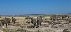 Namibia Day 10