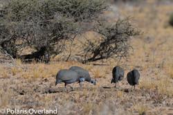 Namibia Day 5