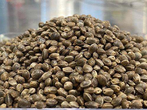 AOSCA Certified Feminized hemp seeds