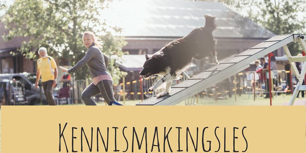 Kennismakingsles AGILITY