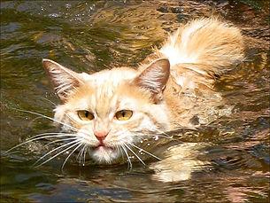 SWIMMING CAT.jpg