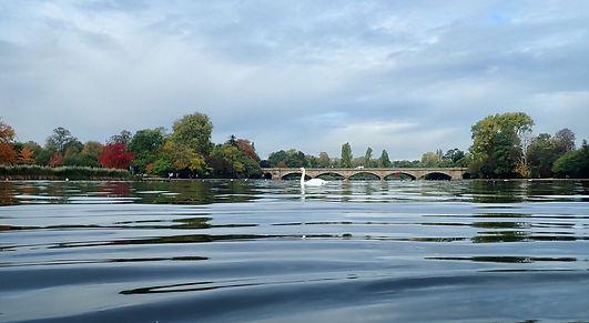 swimpic serpentine swan lake MH.jpg
