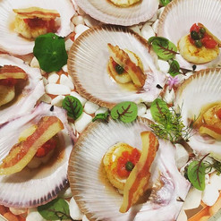 harvey bay scallops