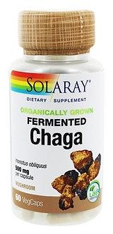 Fermented Chaga