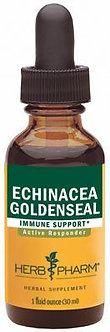 Golden Echinacea