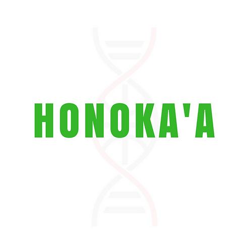 HONOKA'A Skill Enhancement Clinic
