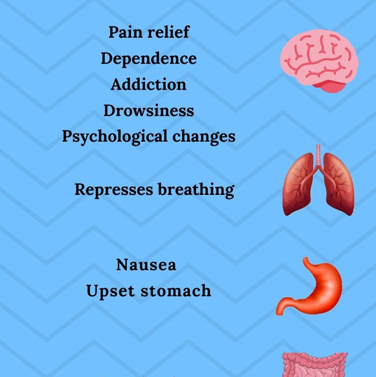 How Opioids Affect the Body