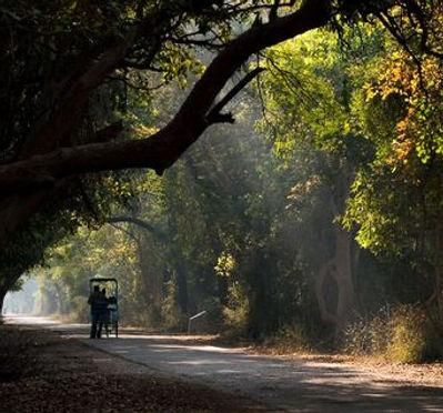 Keoladeo early morning rickshaw ride