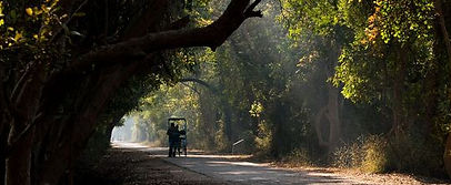 Keoladeo Park with Solo Women Tours
