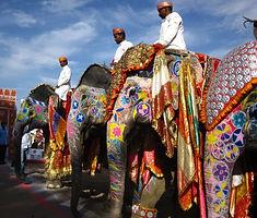 Jaipur elephants 1.jpg