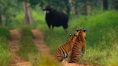 Western Ghats 9.jpg